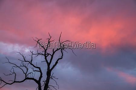sunset at rucksmoor lower saxony germany