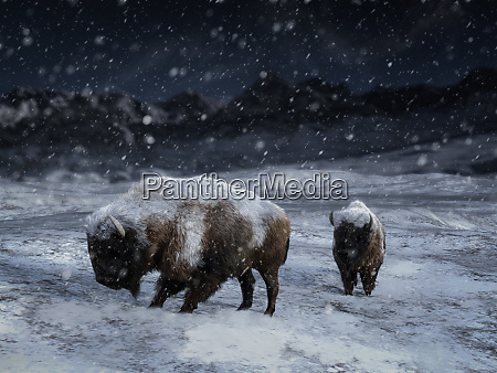 3d rendering of two majestic bison