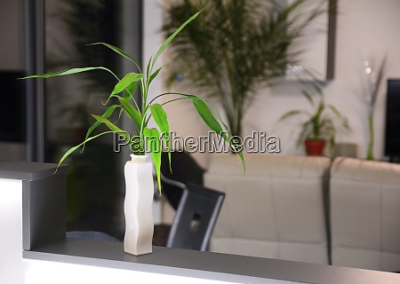 plant in vase home decoration