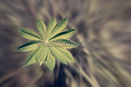 detail of a fresh vibrant plant