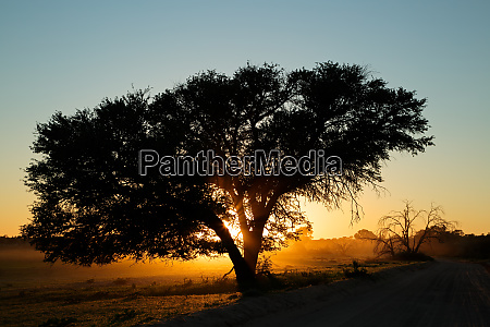 sunset with silhouetted tree and dust