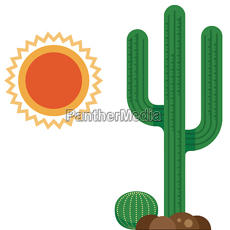 cactus desert hot dry nature wild