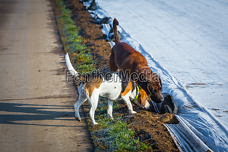 two dogs sniffing on the ground