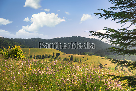 summer nature with forested mountains