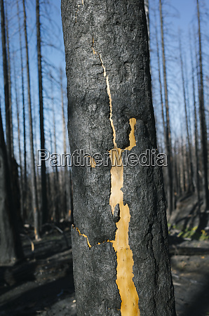 detail of burned tree and forest