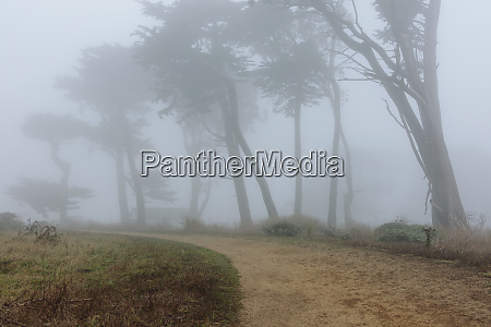 dense fog among cypress trees road