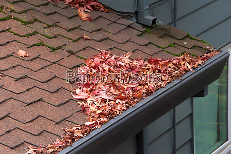 roof of house rain gutters clogged