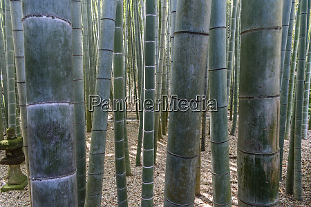 close up of bamboo plants bamboo
