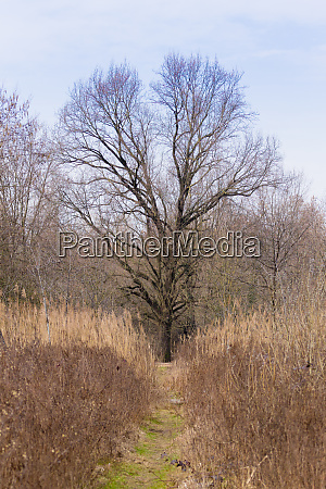 solitaire tree on spring season