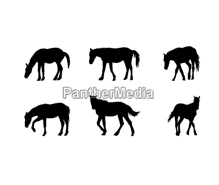 horse runs hops gallops isolated on
