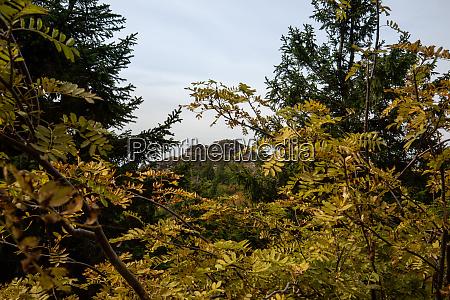 landscape picture at the big arber