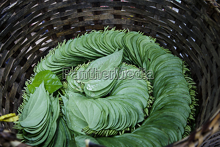 a basket of leaves are organized