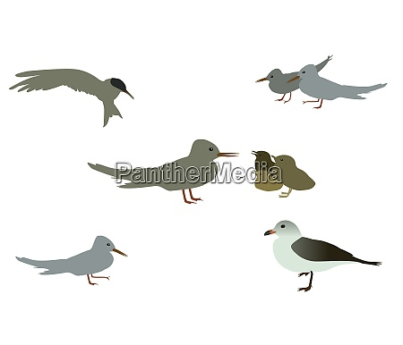 set of seabird seagull isolated on