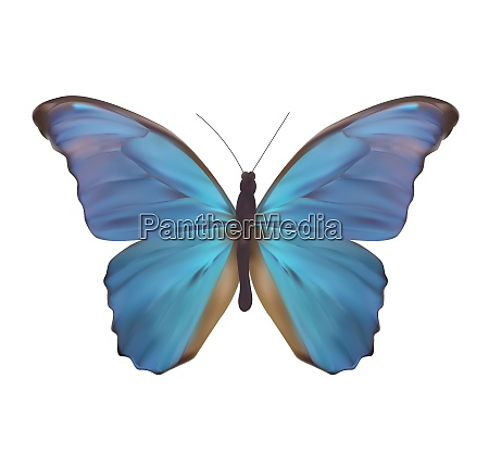 blue butterfly isolated on white realistic