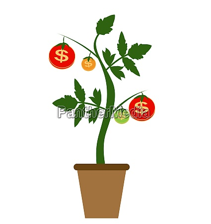 colored money tree dependence of financial