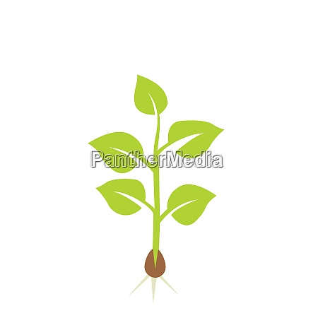 plant seedling vector illustration