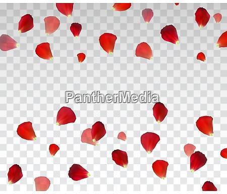 set of naturalistic rose petals on