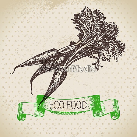 hand drawn sketch carrots vegetable eco