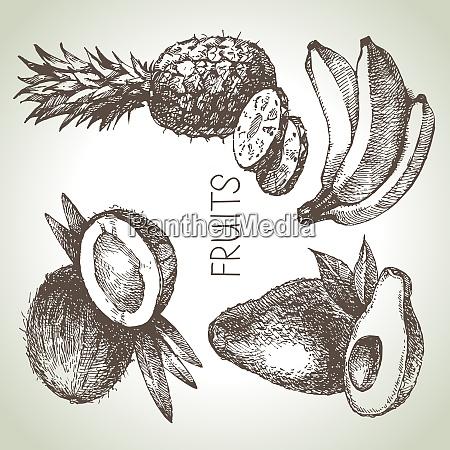 hand drawn sketch fruit set eco