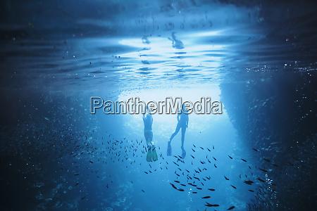 couple snorkeling underwater among fish vavau