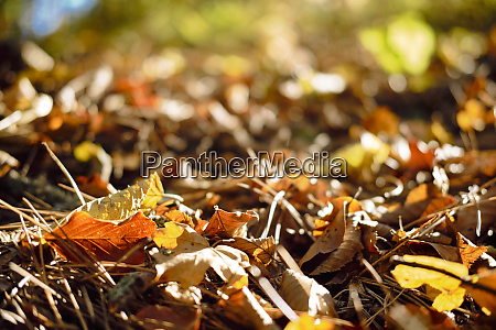 dry leafs in the park during