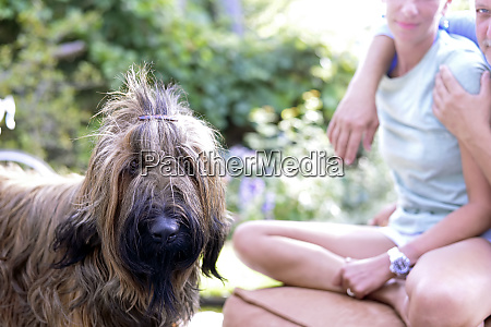 portrait of dog with hair clip