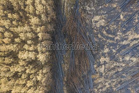 germany brandenburg treuenbrietzen forest aerial view