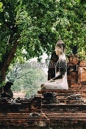 thailand ayutthaya buddha statue surrounded by