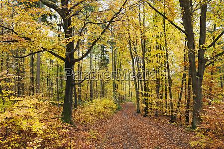 germany rhineland palatinate palatinate forest nature