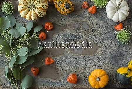 autumnal decoration ornamental pumpkins