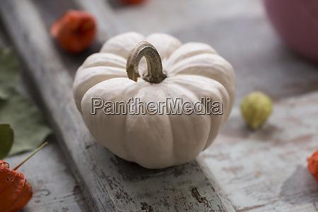white decorative gourd