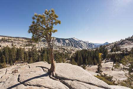 usa california yosemite national park viewpoint