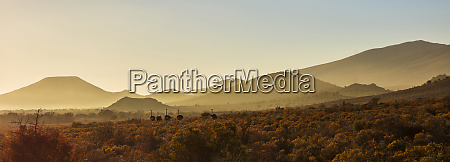 south africa rooiberg mountain scenery african