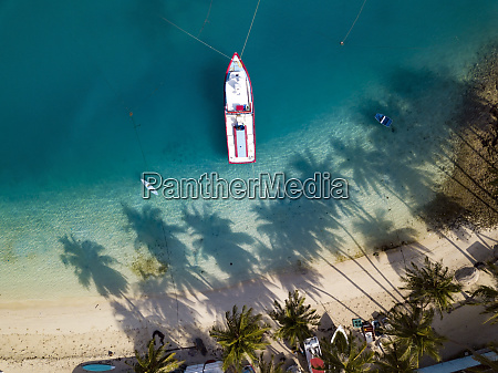 aerial view of beach with palm
