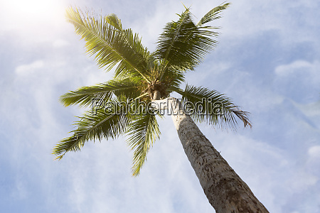 tropical palm tree panorama