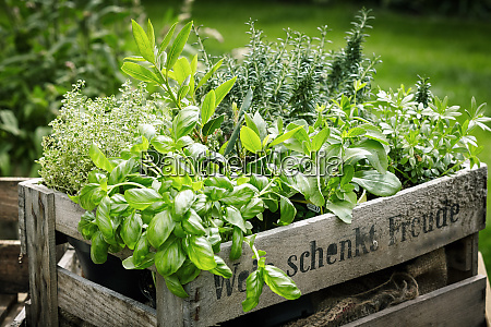 pots of assorted fresh herbs in