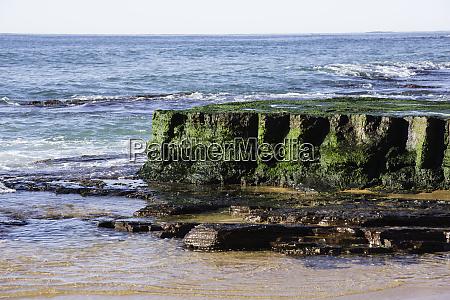 emerald coloured seaweedon rock at low