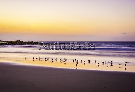 gulls at dawn