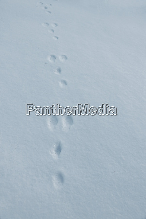 a trace of a field hare