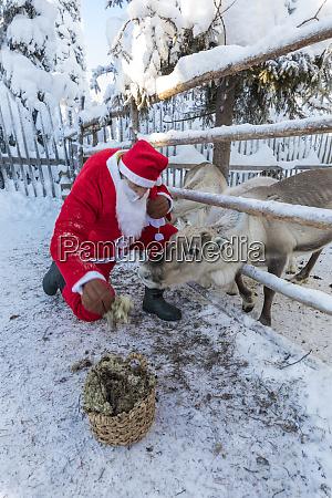 santa claus feeding reindeer ruka kuusamo