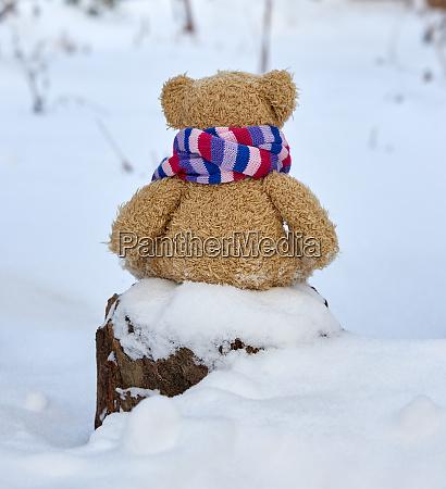 brown teddy bear in a bright