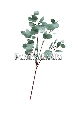 watercolor modern decorative element set eucalyptus