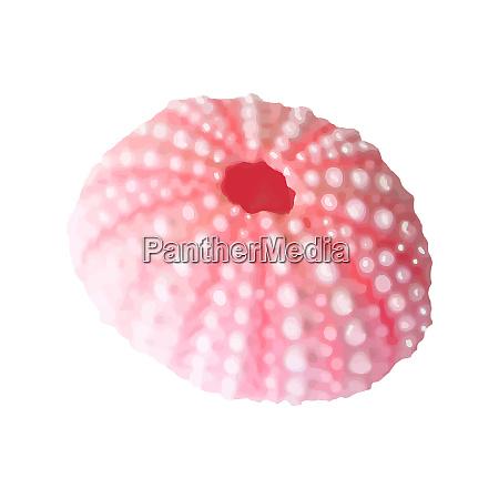 pink seashells vector illustration under the