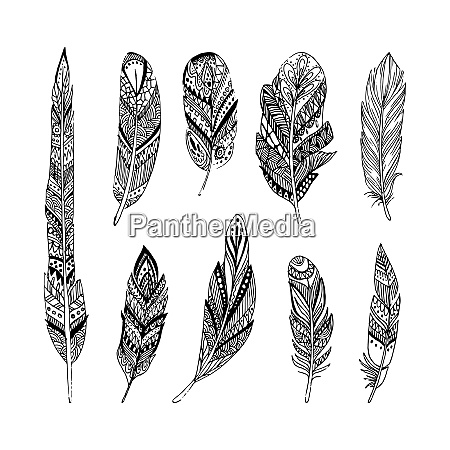 hand drawn vector feathers in boho