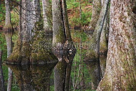 swamp in mississippi
