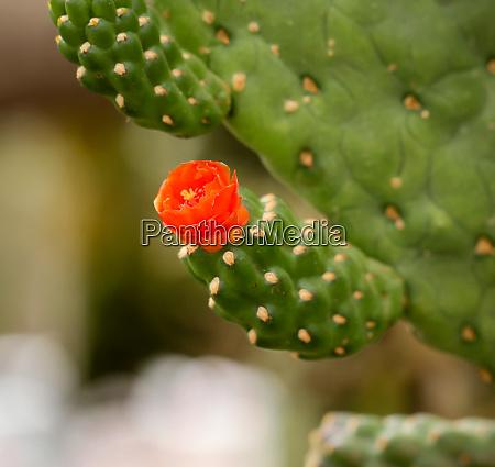 details of a cactus