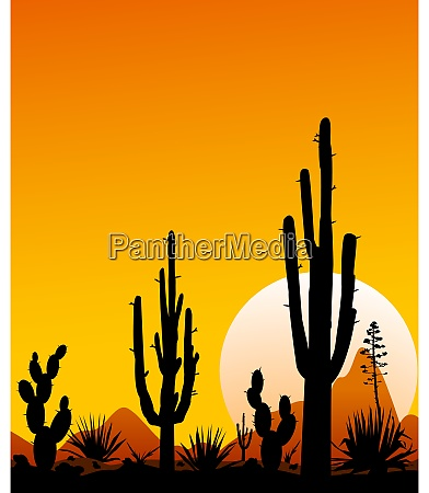 mexico desert sunset 3 desert landscape