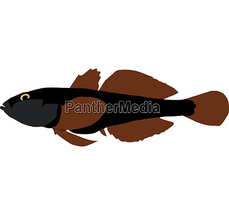 goby vector