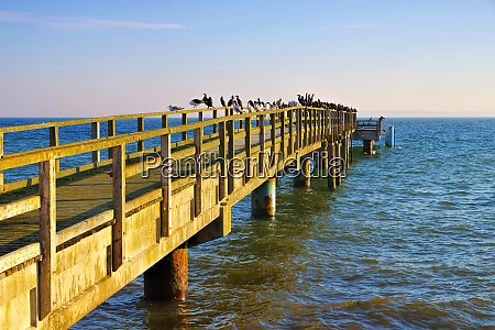 sassnitz pier with many seagulls and