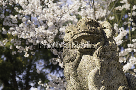 cherry blossom and lion statue at